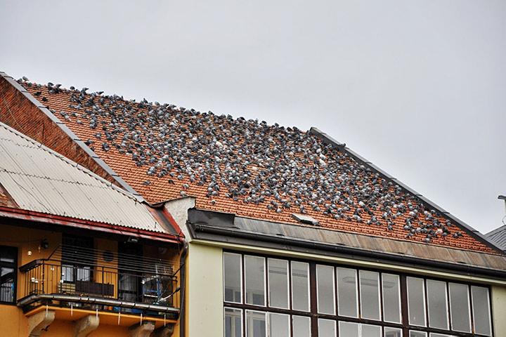 A2B Pest Control are able to install spikes to deter birds from roofs in Bromley.