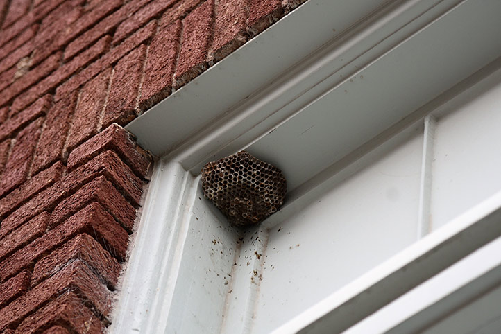 We provide a wasp nest removal service for domestic and commercial properties in Bromley.